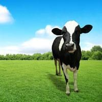 DairyAustralia